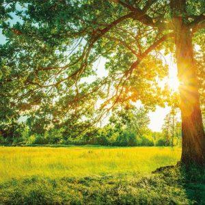 Tapeta sa drvetom i suncem koje prosijava