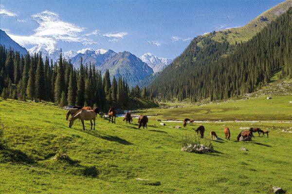 konji koji pasu ispod planina na livadi tapeta sa reljefom