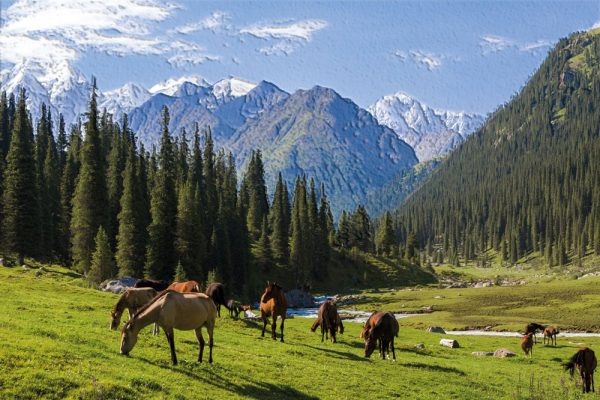 konjska ispasa tapeta priroda