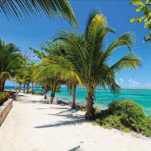 tapete palme na obali mora