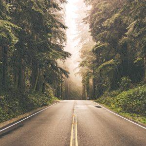 Put kroz maglu tapeta priroda
