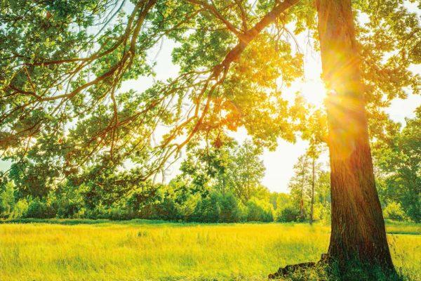 probijanje suncevih zraka kroz krosnju drveta